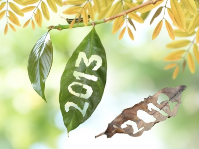 2013 – A Banner Year!